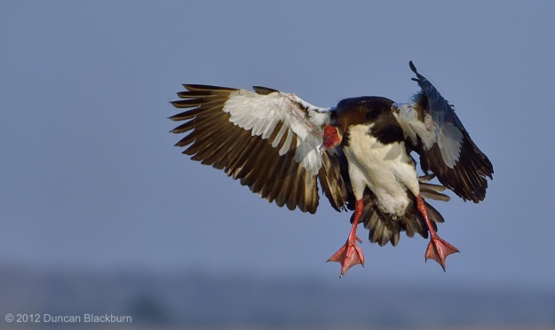 Cleared for landing.......