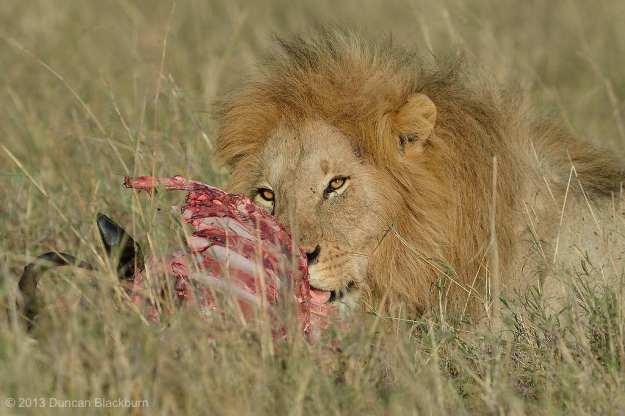 King of the Mara