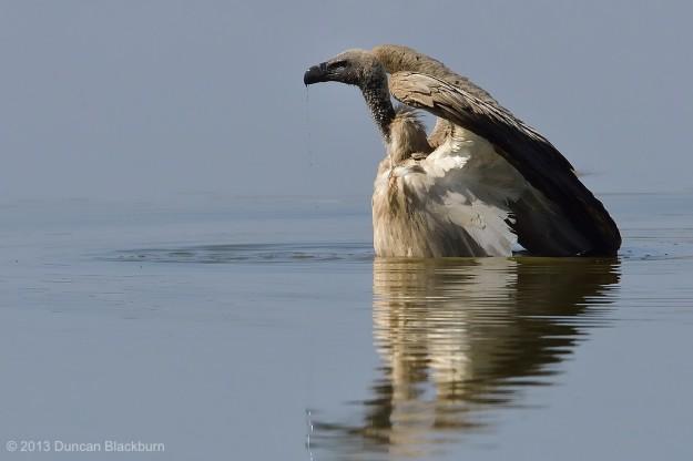 Wading....