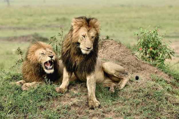 Pride Bosses