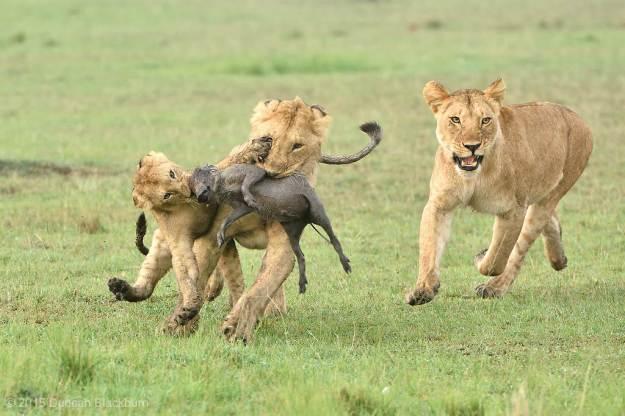 Hunting we shall go....
